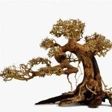 bonsai thủy sinh